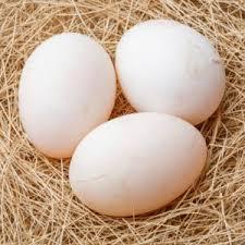 Fresh Duck Eggs Free Range