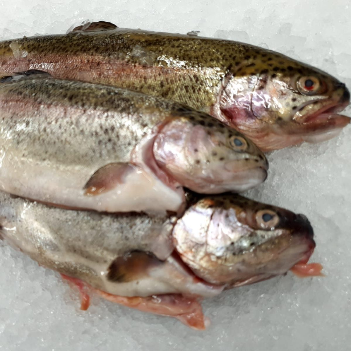 Whole Gutted Trout