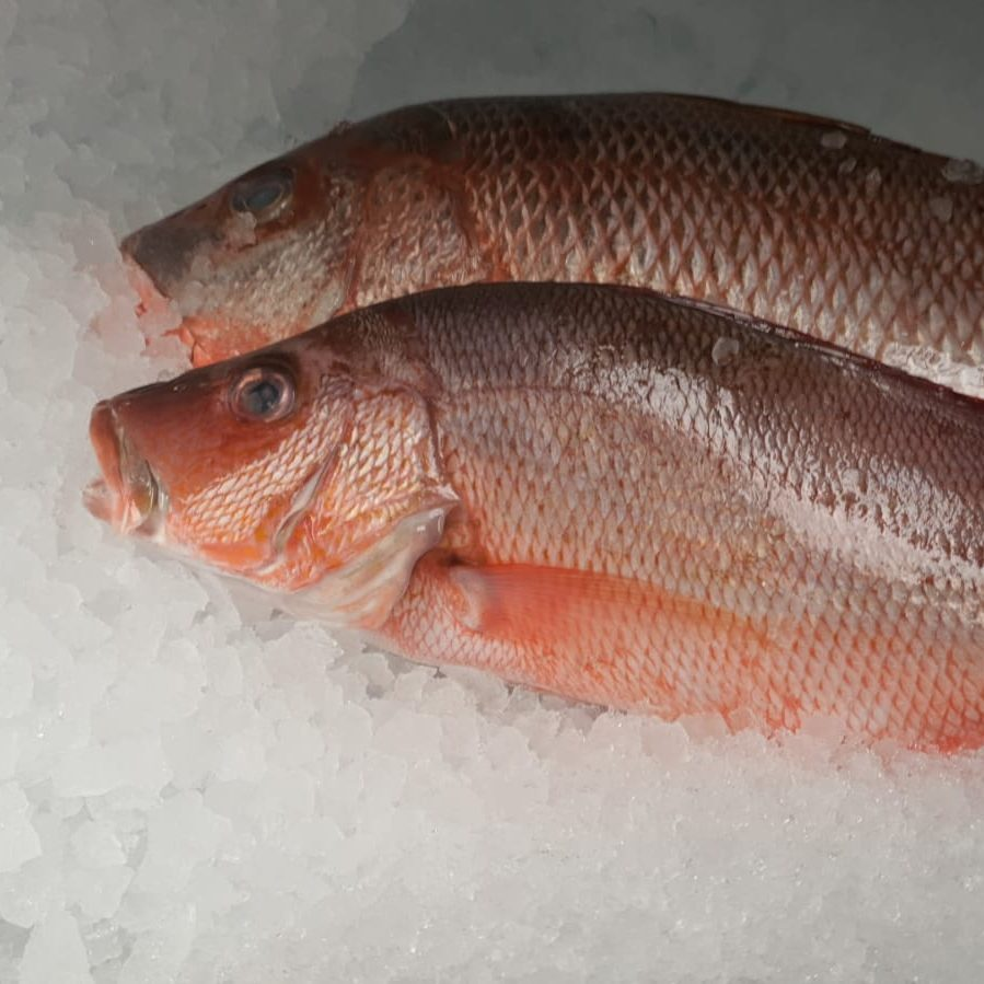 Fresh Whole Red Snapper
